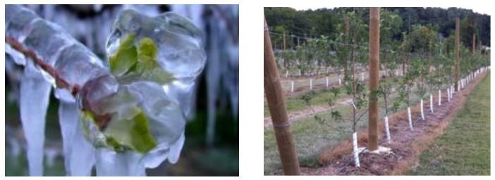 Почвенные корни замораживаются при температуре