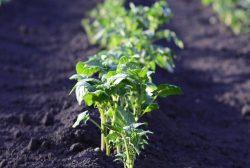Производство овощей с системой поддержки принятия решений iMETOS